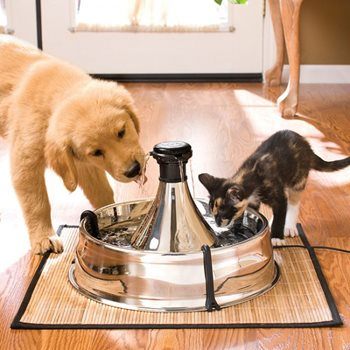 dog and cat drinking from water fountain