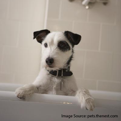terrier_in_bath.png