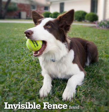 dog-with-tennis-ball_withLogo.jpg