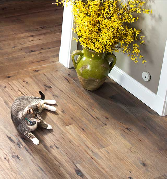 Indoor Fence & Barrier Solutions for Dogs and Cats - The Invisible ...